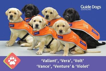 Spaceframe's V Litter | Guide Dogs Queensland | Spaceframe
