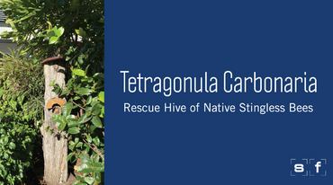 Meet the Team - Native Stingless Bees | Spaceframe